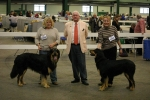 Best of Breed at Birmingham National