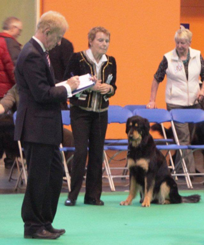 Acorn Best Bitch Crufts 2013