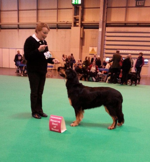 Pines Acorn BB at Crufts 2014