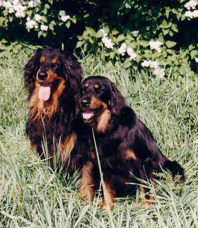 Arek and Chelsea