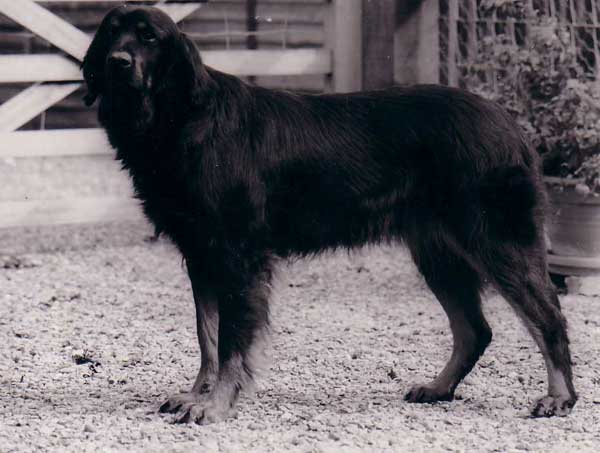 black & white photo of adult Jordis